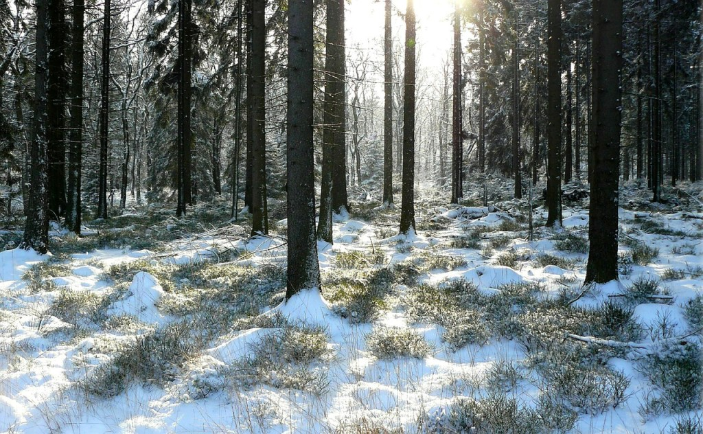 winter-forest-354248_1280